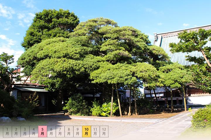 広渡寺の槇