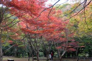 天城の紅葉
