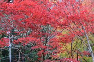 昭和の森会館庭園の紅葉